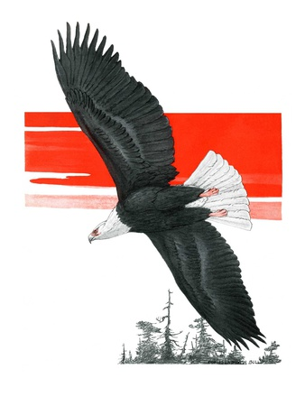 """""""Soaring Eagle,""""March 22, 1924 Giclee Print by Charles Bull"""