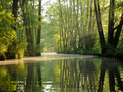 Early Morning in the Spree Forest Photographic Print by Dieter Moebus