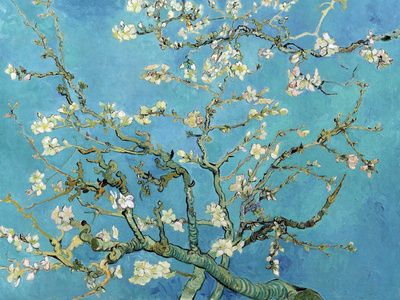 Kvetoucí větve mandloně, San Remy, c. 1890 Umělecká reprodukce