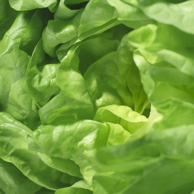Lettuce Photographic Print by Alexander Feig
