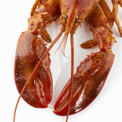 Detail of a Cooked Lobster Photographic Print by Alexander Feig