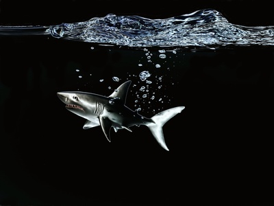 A Shark under Water Photographic Print by Hermann Mock
