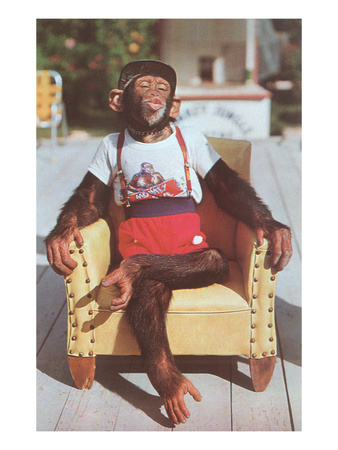 Chimp Sitting in Armchair Pósters