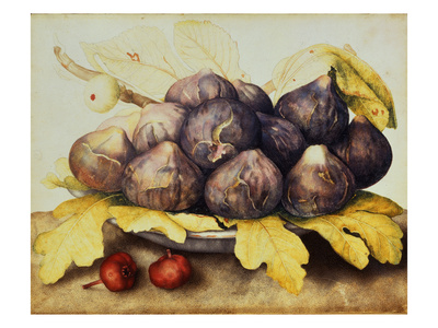 Still Life with Bowl of Figs, c.1650 Giclee Print by Giovanna Garzoni