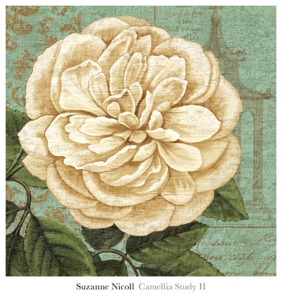 Camellia Study II Prints by Suzanne Nicoll