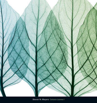 Celosia Leaves I Poster by Steven N. Meyers
