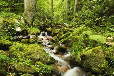 Windberg Waterfall, Near St. Blasien, Black Forest, Baden-Wurttemberg, Germany, Europe Photographic Print by Jochen Schlenker