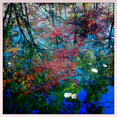 Fall Leaves Reflected in a Pond Photographic Print by Skip Brown