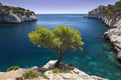 Lone Pine Tree Growing Out of Solid Rock, Calanques Near Cassis, Provence, France Fotografisk tryk af Brian Jannsen