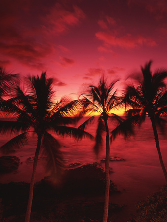 View Palm Trees on Beach, Big Islands, Kona, Hawaii, USA Photographic Print by Stuart Westmorland