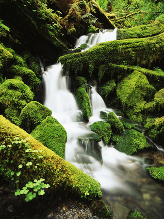 Quinalt Rainforest with Graves Creek Tributary, Olympic National Park, Washington State, USA Photographic Print by Stuart Westmorland