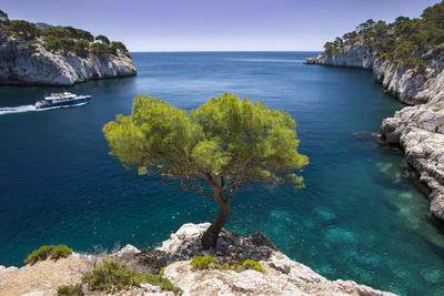 Tour Boat, Lone Pine Tree in the Calanques Near Cassis, Provence, France Stampa fotografica di Brian Jannsen