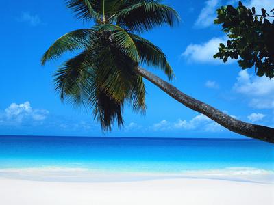 Beach and Palm, Seychelles Island Affischer