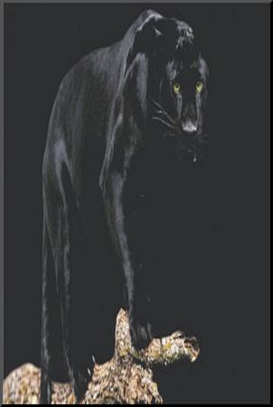 Black Panther (On Log) Art Poster Print Mounted Print