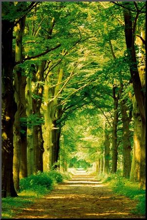 Forest Path Mounted Print by Hein Van Den Heuvel