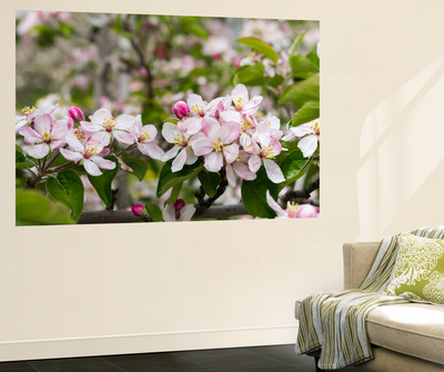 Spring, Apple in the Valley Vinschgau, South Tyrol, Italy Wall Mural by Martin Zwick