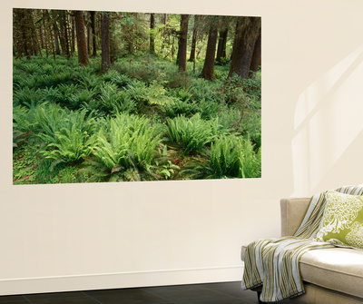 Rainforest, Olympic National Park, Washington State, USA Print by Stuart Westmorland