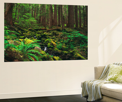 Rainforest, Mossy Rocks, Mt Rainier National Park, Washington, USA Wall Mural by Stuart Westmorland