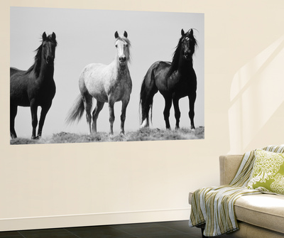Wild Stallion Horses, Alkali Creek, Cyclone Rim, Continental Divide, Wyoming, USA Posters af Scott T. Smith