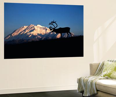 Caribou Wildlife, Mt McKinley, Denali National Park and Preserve, Alaska, USA Prints by Hugh Rose