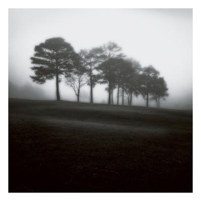 Fog Tree Study 2 Photographic Print by Jamie Cook