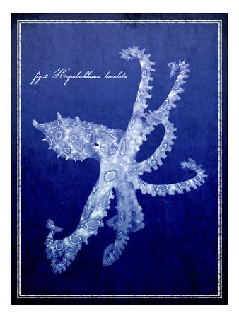Marine Collection G Photographic Print by  GI ArtLab