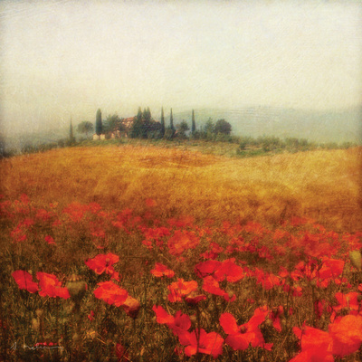 Tuscan Poppies Print by Amy Melious