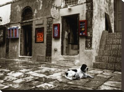 Dogs Life Kunst op gespannen canvas van Dale MacMillan