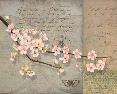 Cherry Blossoms Poster by Lynnea Washburn