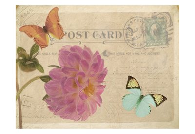 Vintage Butterfly Postcard IV Posters by Taylor Greene