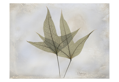 Trident Maple Print by Albert Koetsier