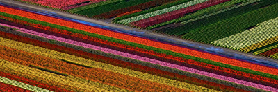 Tulips abstract floral photography by Howard Ruby
