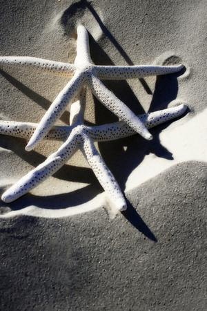 Sea Stars I Photographic Print by Alan Hausenflock