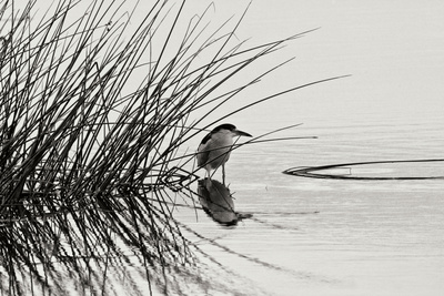 Bird 1 Photographic Print by Lee Peterson