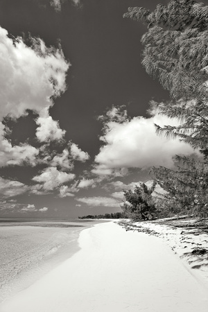 Deep Creek Tree BW Photographic Print by Larry Malvin