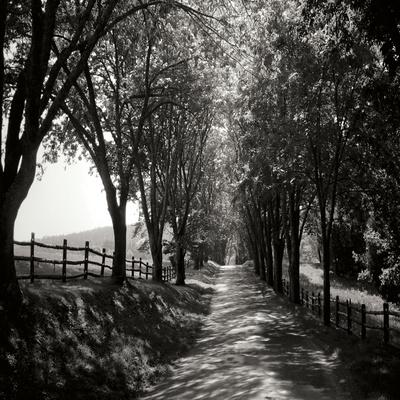Ash Lawn Square I BW Photographic Print by Alan Hausenflock