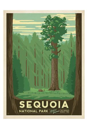 Sequoia National Park Affischer av  Anderson Design Group