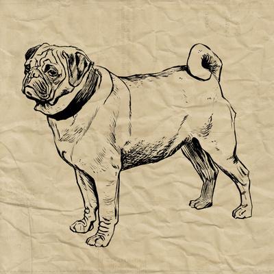 Pug Prints by Sabine Berg
