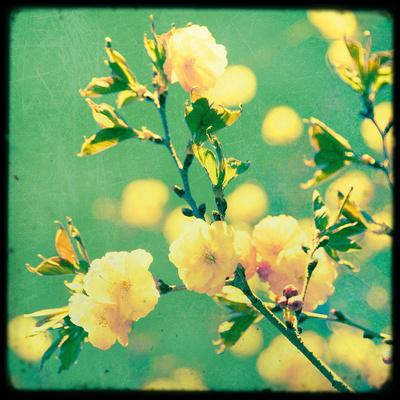 Magnolia Mist Giclee Print by Irene Suchocki