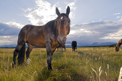 Horses in a Meadow South of Moran Junction Photographic Print by Rich Reid