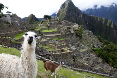 The Ruins At Machu Picchu and a Couple of Llamas Fotografisk tryk af Kent Kobersteen