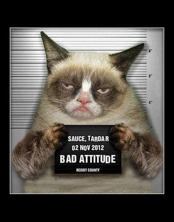 Grumpy Sauce (aka Tardar Sauce) mugshot photo funny picture of a cat