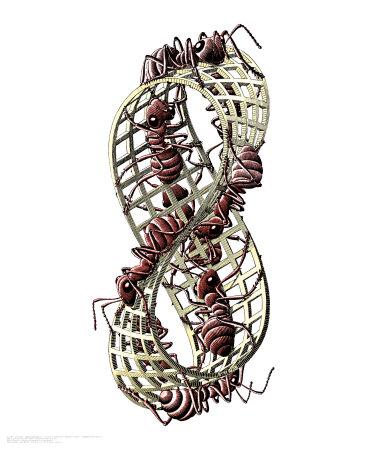 Ants Art by M. C. Escher