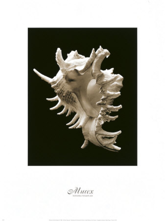 Murex ポスター : ソンドラ・ワンプラー