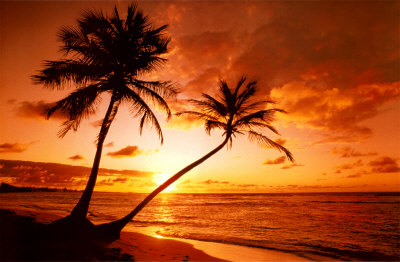 Tropical Beach, Sunset Poster
