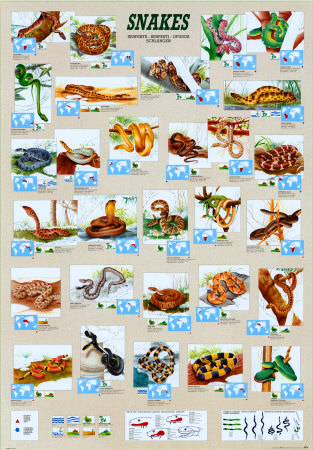 picture story about foods likes and dislikes for kids