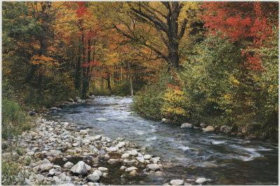 Bachlauf im Wald Kunstdrucke