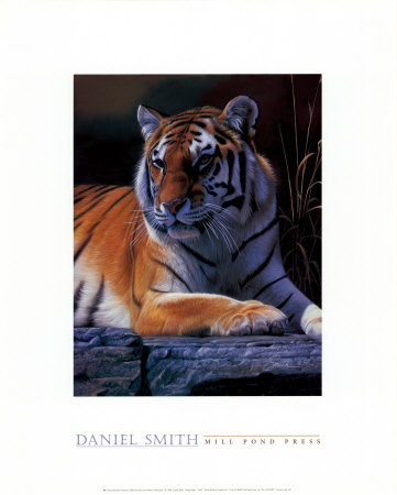 Bengal Tiger Posters by Daniel Smith