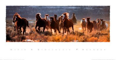 Raccolta del bestiame Poster di David R. Stoecklein