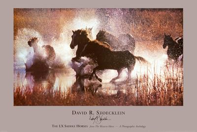 The LX Saddle Horses Poster di David R. Stoecklein